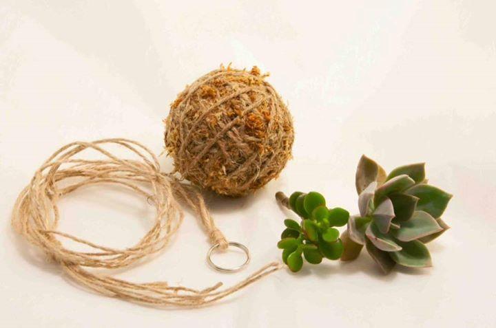 Kokedama/Hanging Baskets Workshop